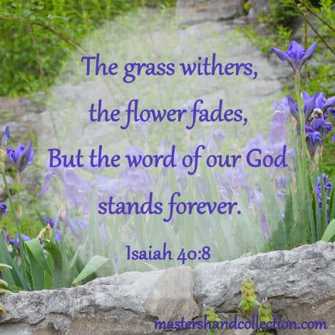 flower fades bible verse, grass withers flower fades