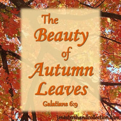 The Beauty of Autumn Leaves Galatians 6:9