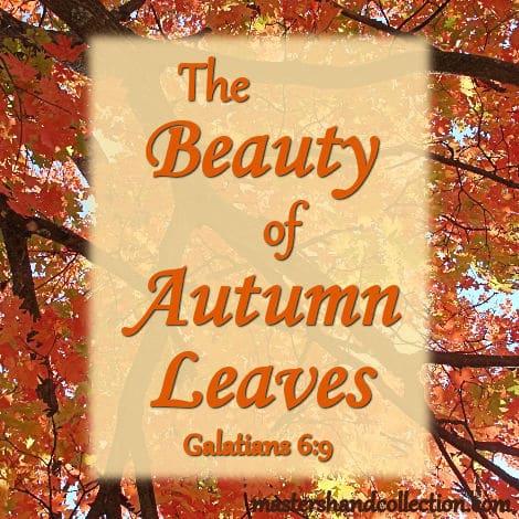 The Beauty of Autumn Leaves Galatians 6:9 Devotional